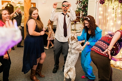 Dogs on the dance floor