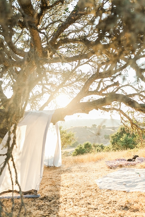 Wedding underneath a tree