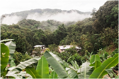 houses in the jungle of puerto rico