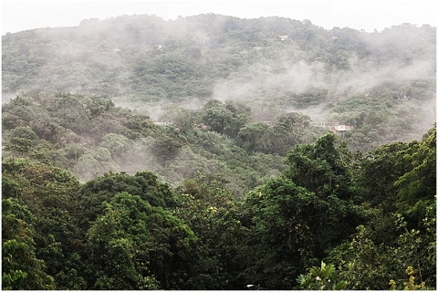 fog in the puerto rico jungle