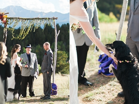 Dog at Colorado wedding