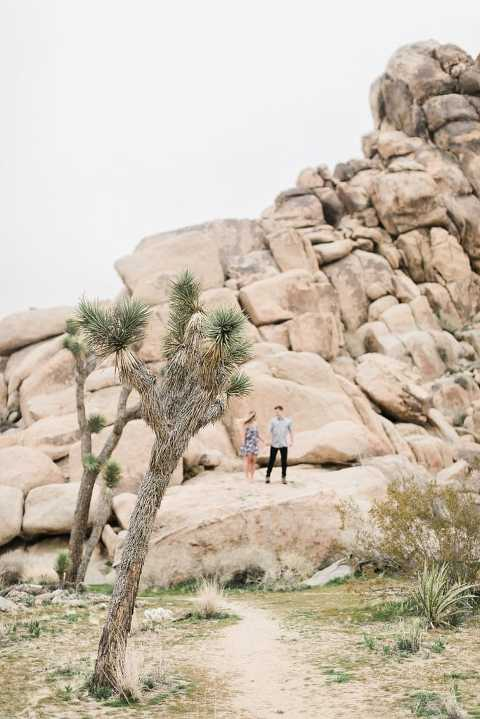 Joshua Tree Elopement Guide explaining everything you need to know to elope in Joshua Tree national park